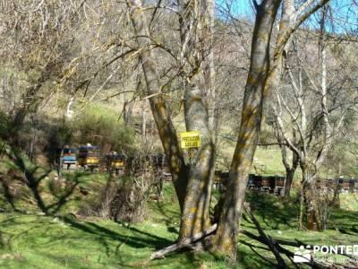 Río Lozoya; Pontón Oliva; Senda Genaro; senderismo fin de semana; senderismo organizado;rutas de s